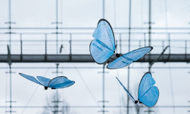 the-amazing-drone-butterflies